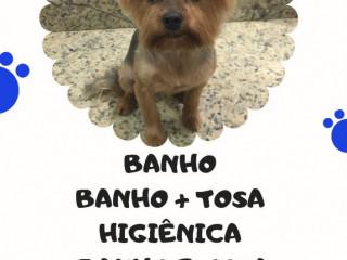 Banho E Tosa